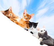 Cats watching Stock Photography