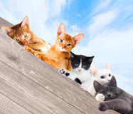 Cats watching Stock Image
