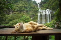 A​ cat and waterfalls in Laos. royalty free stock photography