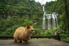 A Cat and waterfalls in Laos. royalty free stock photography