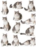 Cats on a white background. Small cats on a white background stock photos