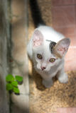 Cats. White and black adorable Cats look stock photos