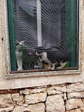 Cats in a window sill. Two cats in a window sill of a rustic house in Fazana, Croatia Stock Photo