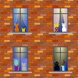 Cats in windows of house Stock Image