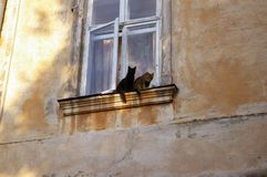 Cats on the windowsill. Two cats are sitting on the windowsill Royalty Free Stock Image