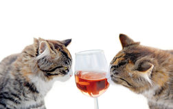 Cats and wine Royalty Free Stock Photos