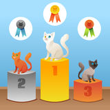 Cats winner Stock Photos