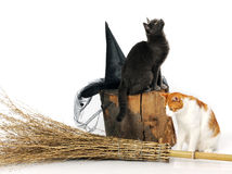 Cats with witch accessories Royalty Free Stock Photography