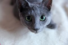 Domestic cats are great pets to cuddle and hug. Cats are wonderful animals and run to meet each other every day Stock Photography