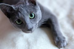 Domestic cats are great pets to cuddle and hug. Cats are wonderful animals and run to meet each other every day Royalty Free Stock Image