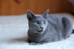 Domestic cats are great pets to cuddle and hug. Cats are wonderful animals and run to meet each other every day Royalty Free Stock Photos