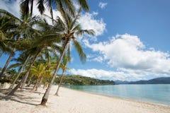 Catseye Beach, Hamilton Island. Australia. Palm trees with clouds in sky at Catseye Beach, Hamilton Island. Australia royalty free stock photography