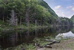 Catskill berg sjö i sommar royaltyfri foto