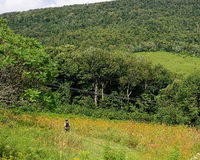 Catskill Mountain summer hiker Royalty Free Stock Photography