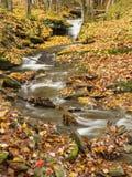 Catskills Autumn Stream arkivfoto