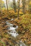 Catskills Forest Leafy Stream royaltyfri fotografi