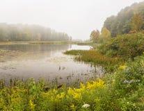 Catskills höstvildblommor på den dimmiga Wawaka sjön royaltyfria foton