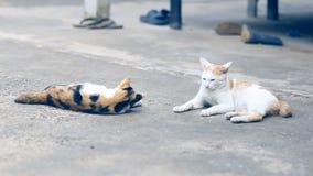 Catson två cementgolvet lager videofilmer