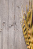 Cattail background Stock Photo