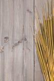 Cattail background Stock Photo