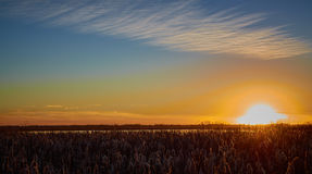 Cattail-Sonnenuntergang lizenzfreies stockfoto