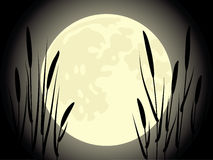 Cattail under the moon Stock Image