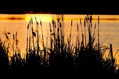 Cattails озером Стоковое фото RF