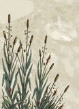 Cattails. Illustration of cattails on a painted canvas background. Plenty of space for copy Stock Images