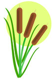Cattails Stock Photos