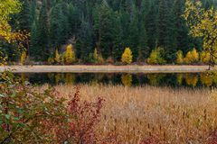Cattails dal lakeshore Fotografia Stock