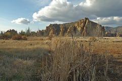 Cattails in der hohen Wüste Stockfotografie
