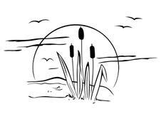 Cattails na ilustração Imagem de Stock