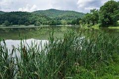 Cattails och vasser på berg en sjö Fotografering för Bildbyråer