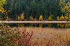 Cattails par l'au bord du lac Photographie stock