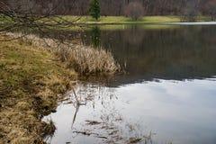 Cattails por el lago Fotografía de archivo