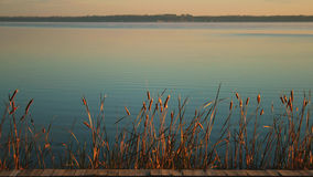 Cattails sul fiume all'indicatore luminoso di mattina Fotografia Stock Libera da Diritti