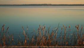 Cattails sur le fleuve en lumière de matin Photographie stock libre de droits