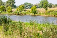 Cattails vid floden Fotografering för Bildbyråer