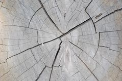 Catted tree Stock Image