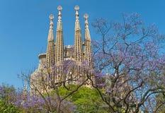 Cattedrale cattolica famosa ed alberi di fioritura il giorno soleggiato Immagini Stock