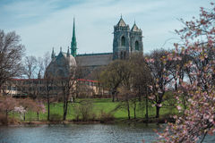 Cattedrale del ` del ` sacro del cuore con Cherry Blossoms Fotografia Stock