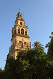 Cattedrale di Cordova Fotografia Stock