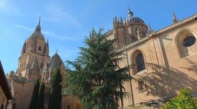Cattedrale di Salamanca dal giardino Immagine Stock Libera da Diritti