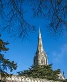 Cattedrale di Salisbury, Wiltshire, Inghilterra - mostrare guglia ed i cedri famosi degli alberi di Libano fotografia stock libera da diritti