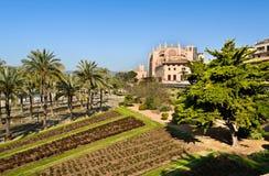 Cattedrale di Santa Maria di Palma, Maiorca fotografia stock libera da diritti