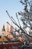 Cattedrale di Zagabria in primavera Fotografia Stock Libera da Diritti