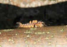 Catterpillar Stockbild