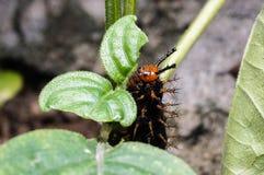 Catterpillar Lizenzfreie Stockfotos
