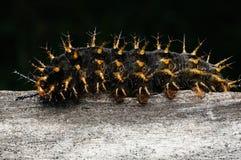 Catterpillar. Close up shot of catterpillar Royalty Free Stock Images