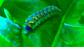 Catterpillar engraçado foto de stock